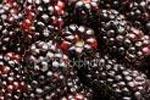 Frozen Marion Berries
